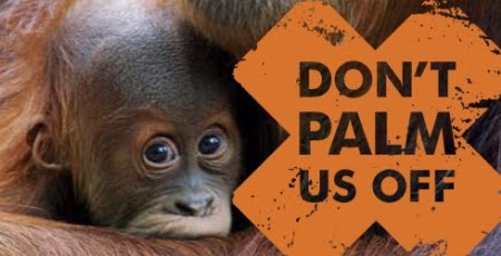 palmoil_orangutan