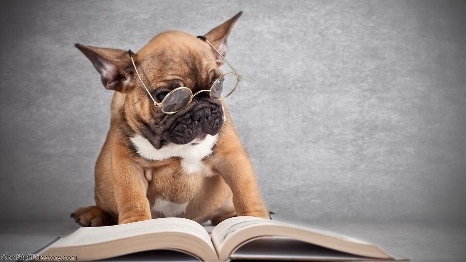 Beautiful Doggie Poems by Alia Boentaran