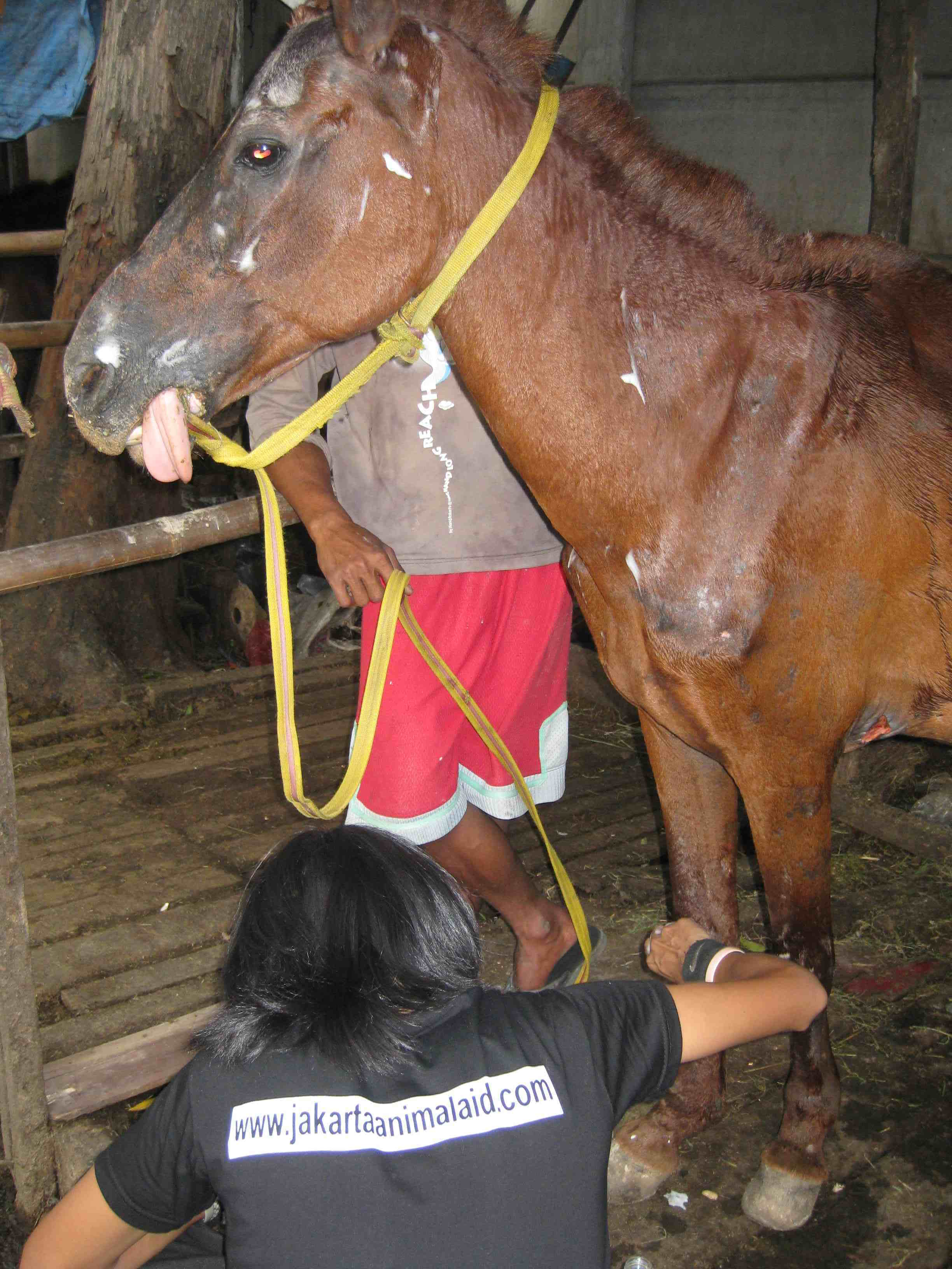 Sharing knowledge on basic horse care to the handlers.