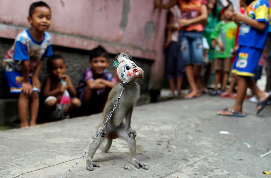 REPORTING A DANCING MONKEY/TOPENG MONYET